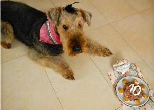 In der Tschechischen Republik lebt unsere Oxi, die Familie unternimmt viel mit den Hunden, und Geburtstage werden besonders gefeiert.