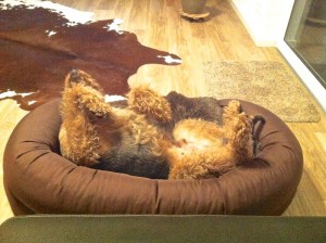 So schläft Oskar schon sehr lange und sehr oft, das sieht ja super glücklich aus!