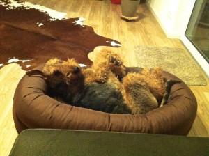 Und hier hat Frauchen sich gerade Sorgen gemacht, wie man so entspannen kann, und der Hund wundert sich darüber und kann es nicht fassen!!