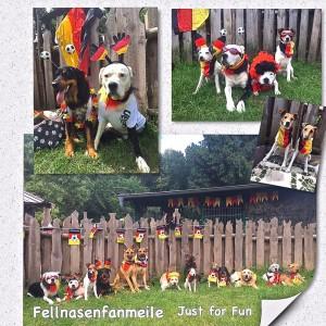 Und für die Hundebesitzer gab es einsehen Erinnerung an dieses Fest, eine Zusammenstellung von verschiedenen Foto's, wo es sicher nicht auf die Sonnenbrille ankam, sondern auf die Disziplin.