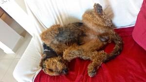 """Und abends, schön schlafen - ich gehöre auch zu den zahlreichen Rückenschläfern aus dem Hause """"vom Dippold!"""