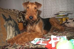 Zafira in Ungarn, hier wird sie Szaffi genannt, zu Hause und mit einigen ihrer Geschenke .