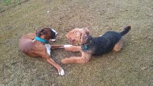Bei Zita in Augsburg gab es Hundegeburtstag mit Freund!