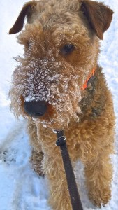 """Wotan liebt Winter und Schnee, und bei diesem Winter in seiner Nähe im braucht man auch ein """"dickes Fell""""!Schwarzwald"""