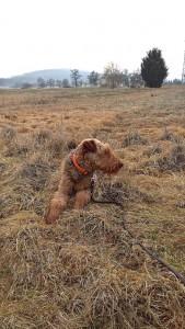 Hier ist Wotan, der Schnee war erst mal weg, und man sieht, dass er ein dickes Fell hat.