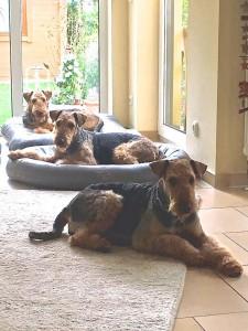 Alle Drei sind aufmerksam, wach und fühlen sich wohl !