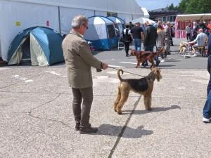 Nochmal ein Bild vom Ausstellungsgelände - Nessy interessiert sich für alles, besonders die vielen Hunde.