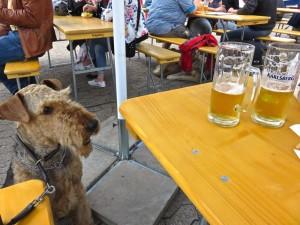 """Geschafft, vorbei, 1. Platz und V1, Herrchen und Frauchen ein Bier (das """"zischt""""), die Anspannung lässt nach."""