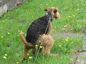 Ist eigentlich gemein, gerade Nessy an ihrem Erfolgstag - aber schauen Sie sich mal den herrlichen lackschwarzen Rücken an!!