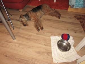 In der Pension, Nessy schläft lange und fest, ihr Fressen war auch fürstlich - dem Anlass entsprechend, und sie hat es genossen!