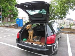 Es ist erstaunlich, was der Hund alles verstehen, leisten und mitmachen muss zu so einem Ereignis. Aber, Nessy kennt das schon.