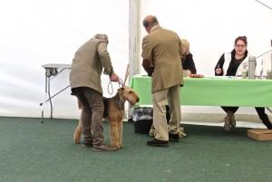 Der Hund im Mittelpunkt, die Erwachsenen haben zu tun - aufregend, es kommt auf jeden Handgriff an.