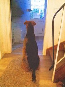 Schnappschuss - täglich das Gleiche, Frauchen bereitet das Abendbrot vor, da muss gleich Herrchen kommen, da sitze ich schon mal und warte!!