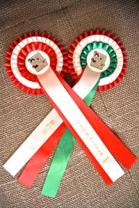 Auszeichnungen zur Klubsiegerausstellung Airedale-Klub Ungarn 2017.
